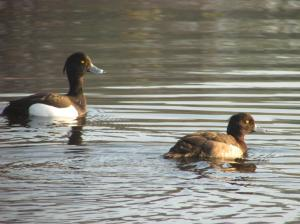 Another gratuitous picture of a pair of tufties!