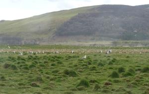 Gulls on territory