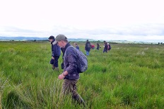 Walking a transect for LBO