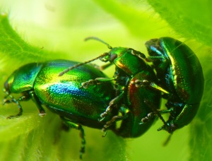 Beetle action!