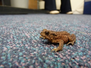 A young Toad found outside the office!