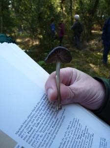Leptonia serrulata? A new discovery for Richard!