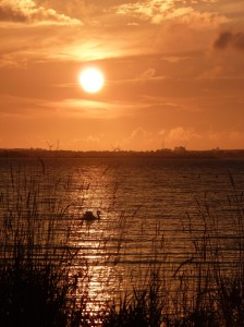 A Mute Swan drifts in front of the sunrise