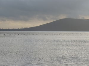 A raft of Goosanders drifted across the loch as I set out for the island