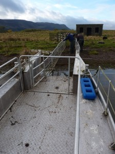 Scott and Jim prepare the gates for directing the sheep toward the boat