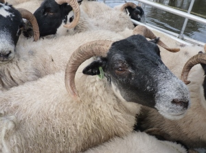 One of the flock