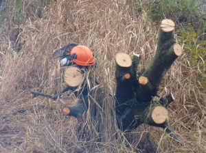 A hard hat takes a rest on one of the multiple willow stumps left behind.