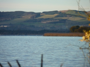 The ever-present chorus of Whooper Swans on the loch.