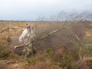 Volunteer Rod heaving a tree onto the pile