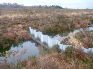 Many of the ditches have been dammed in an attempt to retain more water in the bog