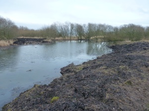 The dredged vegetation on the pond shoreline, with a clear view from the path