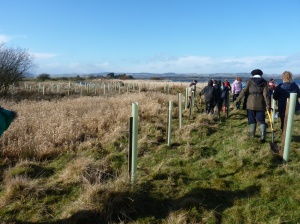 Approximately 300 trees were planted during the day.