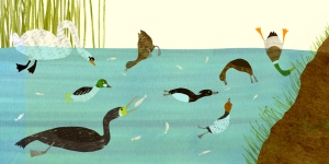 Page 2 - showing the array of bird life on the loch as Tufty and friends feed on fish, vegetation and aquatic invertebrates
