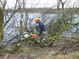 Steve and Iain came over from the Stirling NNRs, both returning to Loch Leven NNR for one day to help us out with some chainsaw work.