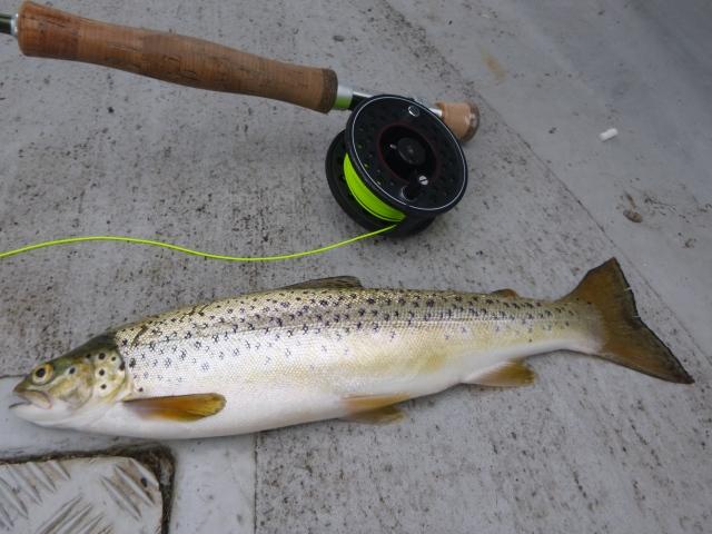 Leven trout