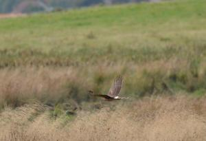 ...but there have been multiple sightings so far this Autumn.