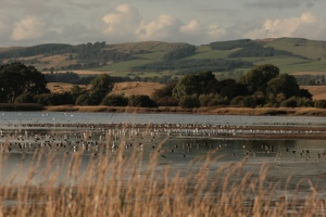 Assorted ducks, waders and gulls all congregate in the shallows on the east side of the loch