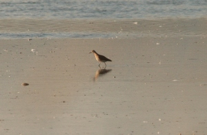 One of two Ruff