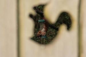 a squirrel through the squirrel hole!
