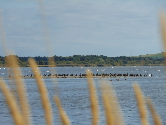 Cormorants on one of the islands