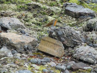 Robin in front of the factory hide