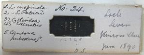 clacustrisslide