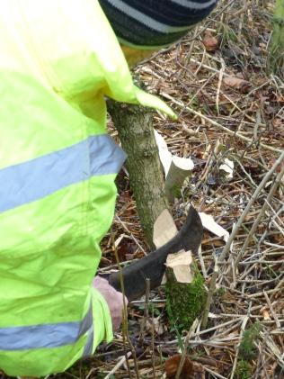 Billhook being used by Torquil