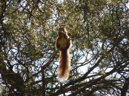 Backlit tail