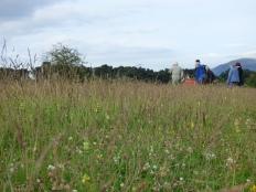 Burleigh Meadow